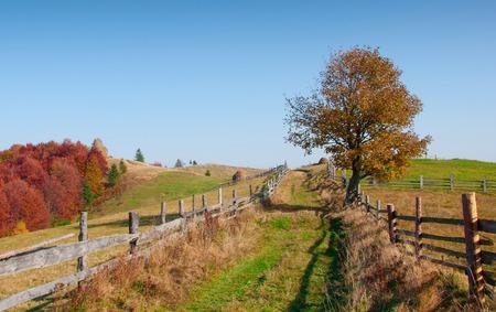 Photo for Beautiful autumn landscape in the mountains, Carpathian, Ukraine - Royalty Free Image