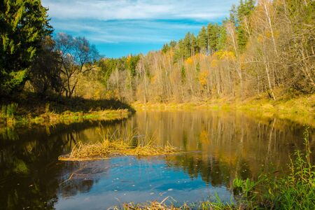Photo for Autumn water landscape with bright colorful yellow leaves in the Vitebsk region, Belarus.autumn river in the forest - Royalty Free Image