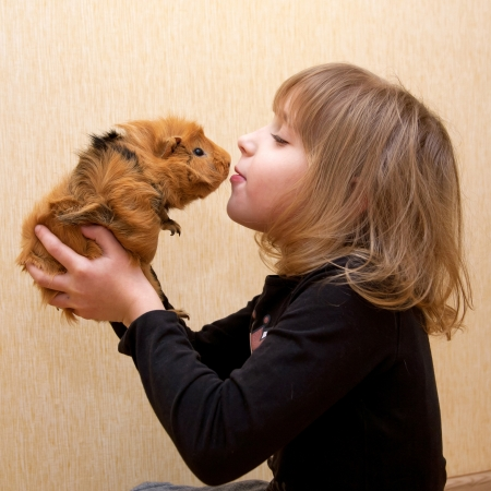 The little girl kissing the guinea pig. Love for animals concept.の写真素材