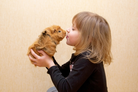 The little child kissing the guinea pig. Love for animals concept.の写真素材
