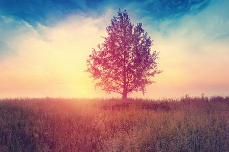Landscape with  tree over sunrise