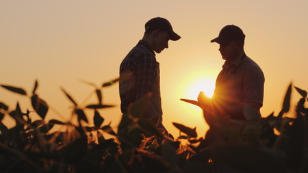Photo for Two farmers talk on the field. Use a tablet - Royalty Free Image