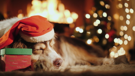 Shepherd in a festive cap sweetly dozing by the burning fireplace. Near it lies a crust with a gift
