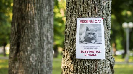 Photo pour Banner with the announcement of the missing cat hanging on a tree in the park - image libre de droit
