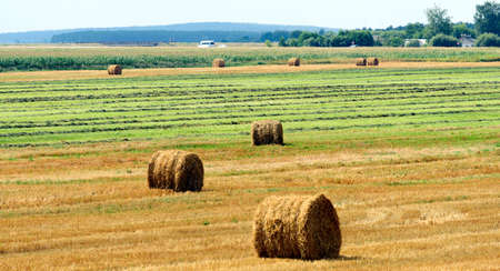 Photo for agriculture, harvesting karma, straw bales in the field near the village. - Royalty Free Image