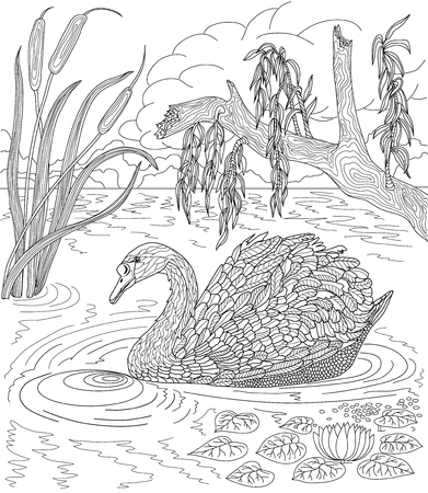 Illustration pour Hand drawn bird - Swan swimming in a lake with reeds and water lilies. Coloring page. - image libre de droit
