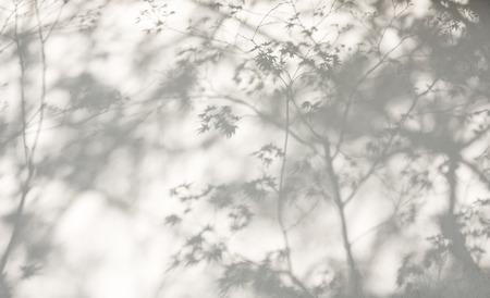 Foto de Tree leaves shadow on wall Nature Abstract background - Imagen libre de derechos
