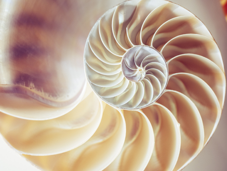 Foto de Pearl structure Nautilus symmetry cross section inside pattern Nature background texture - Imagen libre de derechos