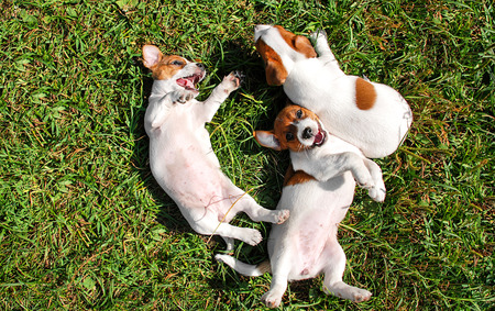 Photo for Cute puppies playing outdoors - Royalty Free Image