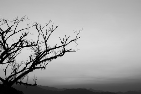 Dead tree branch, black and white