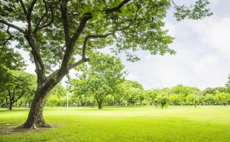 Photo for field, big tree, sun and blue sky - Royalty Free Image