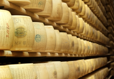 wheels of italian typical hard cheese in a cheese factory