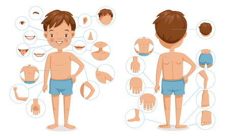 Ilustración de Boy body front view and rear view. Children with different parts of the body for teaching. Body details.The diagram shows the various external - Imagen libre de derechos