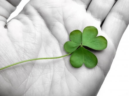 clover in the hand , can be used as concept for luck related themes, selective desaturation