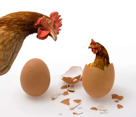 Photo pour Who was the first, the chicken or the egg? Illustrated philosophical dilemma.  - image libre de droit