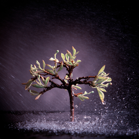 Photo for lonely tree with green leaves in time of storm and fog - Royalty Free Image