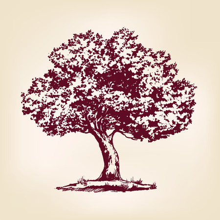 Tree hand drawn vector llustration realistic sketch