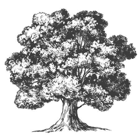 Illustration pour Tree hand drawn vector illustration realistic sketch - image libre de droit