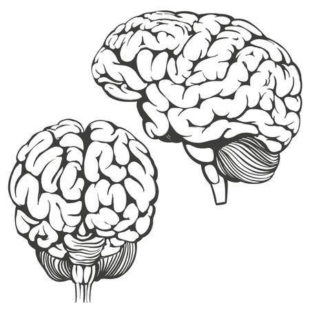 Illustration pour brains collection, human anatomy, icon cartoon hand drawn vector illustration sketch. - image libre de droit