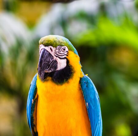 Photo pour Blue and yellow macaw, parrot in a natural park in Cartagena, Colombia - image libre de droit