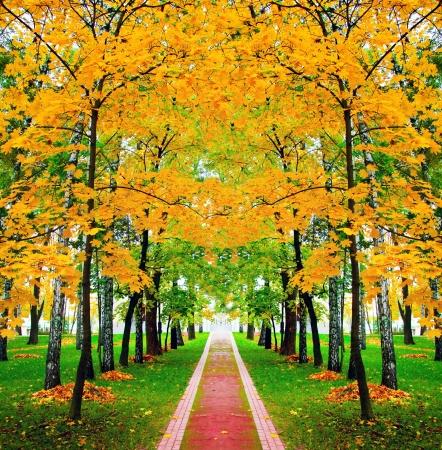 Foto de beautiful autumn park - Imagen libre de derechos