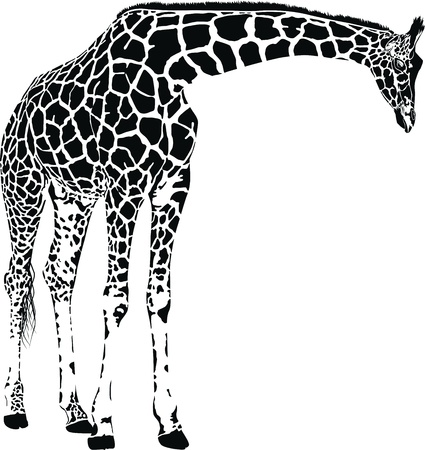 Giraffe with spots