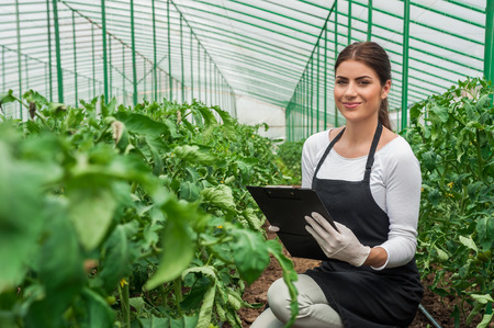 Portrait of a young woman at work in greenhouse,in uniform and clipboard in her hand   Greenhouse produce  Food production  Tomato growing in greenhouse