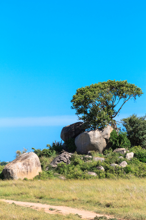 Trees grow on rocks. Savanna of the Serengeti. Africa