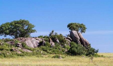 Trees on the cliffs and rocks in Serengeti. Tanzania, Africa