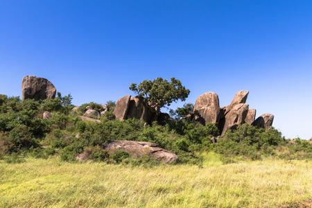 Trees on the rocks in Serengeti. Tanzania, Africa