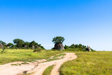 Yellow road in savanna of Serengeti. Tanzania, Africa