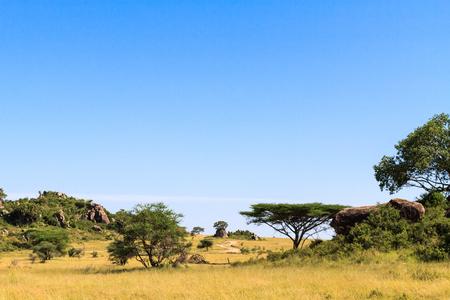 Panorama of savanna Serengeti. Tanzania, Africa