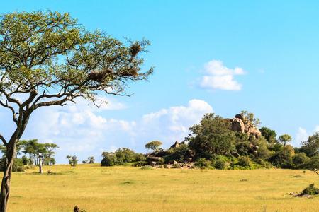 Endless savanna of Serengeti. Hill and trees and blue sky. Tanzania, Africa