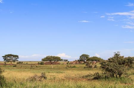 A blue sky of Serengeti. Tanzania, Eastest Africa
