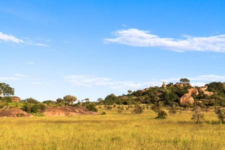 Landscapes of Serengeti. Tanzania, Africa