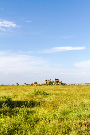 Endless savanna of Serengeti. Tanzania, Africa