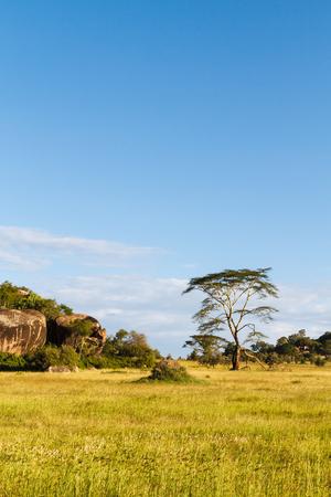 Endless plain of Serengeti. Tanzania, Africa