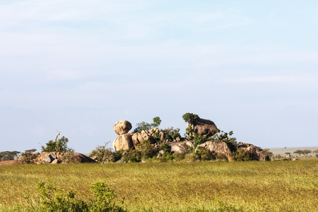 Stones and rocks on endless plain of Serengeti. Tanzania, Africa