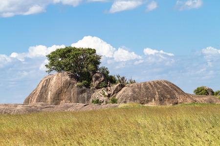 Panorama of Serengeti. Trees on the stones. Tanzania, Africa (Rev.2)