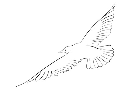Black drawing of seagull isolated on the white.