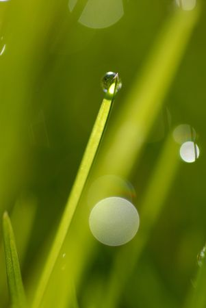 A lush green grass with dew