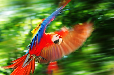 Wild parrot living in Copan, Central America