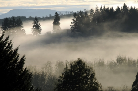 Thick fog and mist fall over the mountain hilltops of trees in the early morning