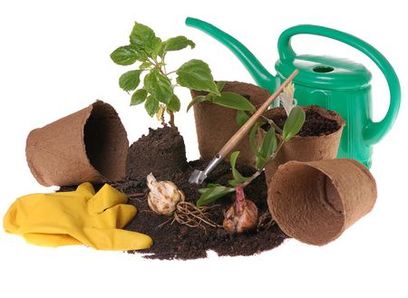 springtime  home gardering- potting plants  in peat pots