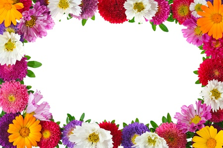 colorful aster floral frame isolated on white background