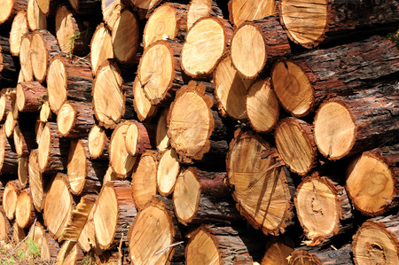 Firewood  supply ready for use.