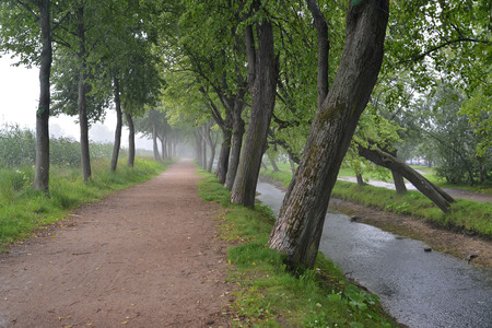 Lime Avenue in summer rainy day