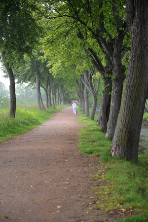 Lime Avenue in summer rainy day. Peterhof