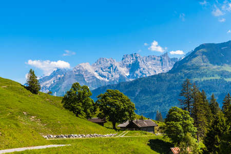 Photo pour Panorama view on the hiking path on Bernese Oberland with trees in foreground and mountain range of the alps in background, Switzerland. - image libre de droit