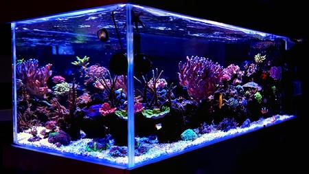 Foto de Coral reef aquarium tank scenic shot - Imagen libre de derechos